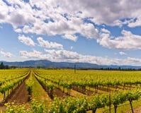 Viñedos de Napa Valley, primavera, montañas, cielo, nubes Imágenes de archivo libres de regalías