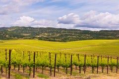 Viñedos de Napa Valley, primavera, montañas, cielo, nubes Imagenes de archivo