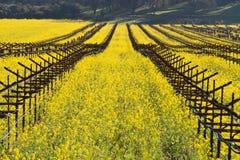 Viñedos de Napa Valley y mostaza de la primavera Fotos de archivo libres de regalías