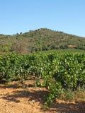 Viñedos de Provence fotos de archivo