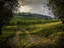 Viñedos de Toscana Imagen de archivo