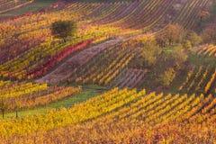 Viñedos del otoño de Moravian Foto de archivo