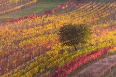 Viñedos del otoño de Moravian Imagen de archivo libre de regalías