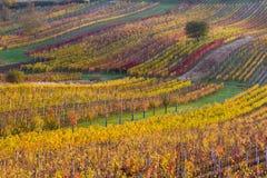 Viñedos del otoño de Moravian Fotos de archivo