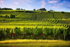 Viñedos del paisaje de la ruta del vino Francia, Alsacia fotografía de archivo
