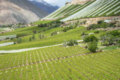 Viñedos del valle de Elqui, pieza de los Andes de Atacama Fotos de archivo libres de regalías