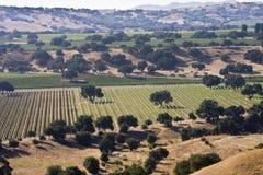 Viñedos del valle de Santa Ynez Imagen de archivo
