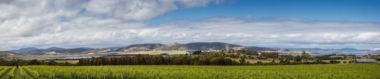 Viñedos delante de la bahía de la barrilla en Tasmania imagen de archivo