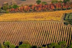 Viñedos en colores del otoño Imagen de archivo libre de regalías