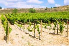 Viñedos en día de verano soleado La Rioja Fotos de archivo