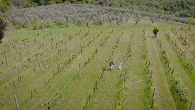 Viñedos en el italiano Toscana En la primavera de la vid con una pequeña cantidad de verdor, y requerir cuidado almacen de metraje de vídeo