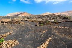 Viñedos en el La Geria, Lanzarote, islas Canarias, España Fotos de archivo libres de regalías