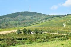 Viñedos en el lado de la colina Imagen de archivo libre de regalías