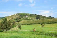 Viñedos en el lado de la colina, Tokaj Foto de archivo libre de regalías