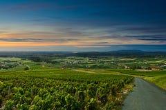 Viñedos en el tiempo de la salida del sol, Beaujolais, Francia del Beaujolais Imagen de archivo libre de regalías