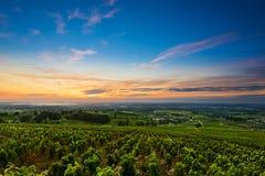 Viñedos en el tiempo de la salida del sol, Beaujolais, Francia del Beaujolais Foto de archivo
