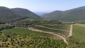 Viñedos en las montañas de Abrau-Dyurso almacen de video