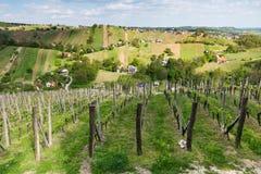 Viñedos en Lendavske Gorice en Eslovenia fotos de archivo