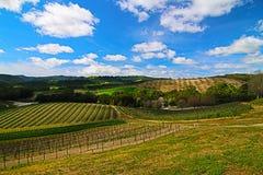 Viñedos en paisaje del país vinícola de Paso Robles Foto de archivo libre de regalías