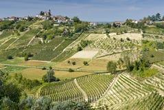 Viñedos en Piedmont Foto de archivo libre de regalías