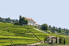 Viñedos en Suiza Imagen de archivo