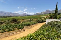 Viñedos en Suráfrica Imágenes de archivo libres de regalías