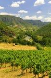 Viñedos, gargantas du el Tarn, Francia Imágenes de archivo libres de regalías