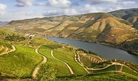 Viñedos hermosos en el valle del Duero Imagen de archivo