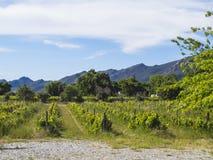 Viñedos situados entre las montañas Suráfrica Foto de archivo libre de regalías