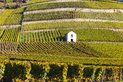 Viñedos, Suiza Fotografía de archivo libre de regalías