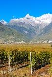Viñedos, Suiza Foto de archivo libre de regalías