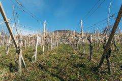 Viñedos vacíos en la región de crecimiento de vino de Valtelina de Lombardía, Italia durante invierno imagen de archivo libre de regalías