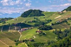 Viñedos verdes en las colinas de Piamonte Foto de archivo libre de regalías