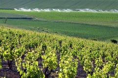 Viñedos y campo de maíz, La Rioja rural, España Imagenes de archivo