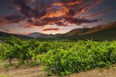 Viñedos y montañas en el fondo de la puesta del sol Fotografía de archivo libre de regalías