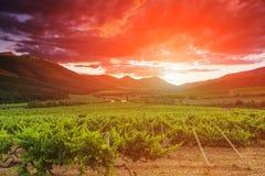 Viñedos y montañas en el fondo de la puesta del sol Imagen de archivo libre de regalías
