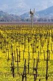 Viñedos y mostaza de Napa Valley en primavera Fotografía de archivo