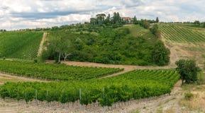 Viñedos y olivares en provincia del ` s Toscana de Italia imagen de archivo libre de regalías