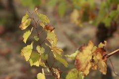 Vi?edo en oto?o Hierba seca y hojas amarillas Fondo borroso naturaleza Profundidad del campo baja Imagen entonada Copie el espaci imagen de archivo