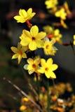 Guld- fjädra regnar Royaltyfri Fotografi