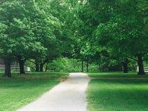 Via in alberi verdi Fotografia Stock