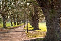 Via allineata albero Immagini Stock