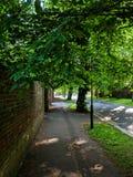 Via allineata albero con luce solare pezzata di mattina Fotografie Stock