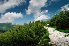 Via alpina approssimativa Fotografia Stock