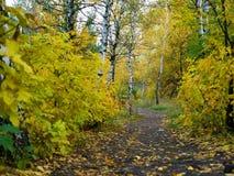 Via attraverso il bello paesaggio di autunno della foresta di autunno Fotografia Stock