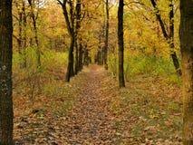 Via attraverso il bello paesaggio di autunno della foresta di autunno Immagine Stock