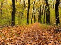 Via attraverso il bello paesaggio di autunno della foresta di autunno Immagine Stock Libera da Diritti