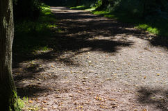 Via attraverso il terreno boscoso Fotografie Stock Libere da Diritti