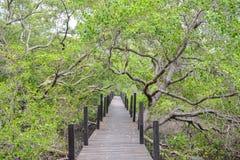 Via attraverso il terreno boscoso fotografia stock libera da diritti