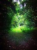 Via attraverso la foresta Fotografia Stock Libera da Diritti